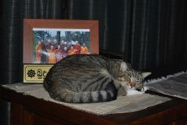 Subha, the cat, contemplating Old Age, Sickness and Death during Vesak Meditation Retreat 2013 at Patacara Bhikkhuni Hermitage.